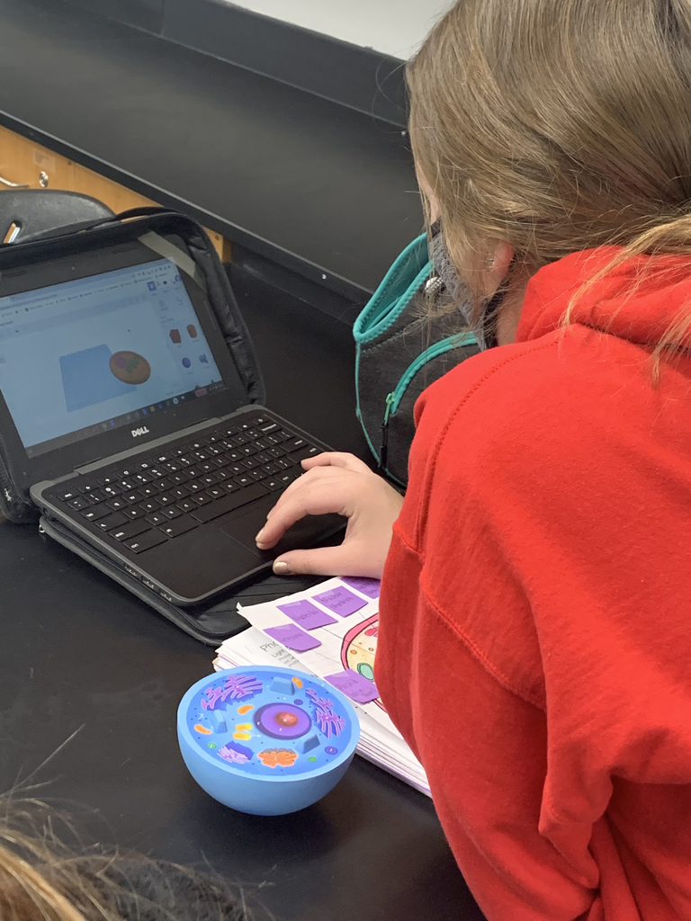 Student creating a cell on a Chromebook.